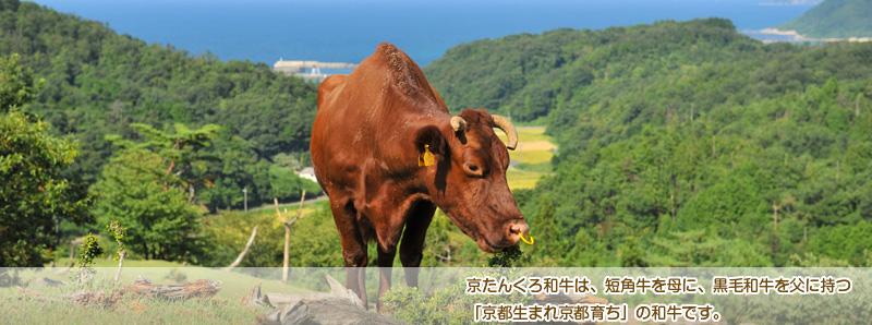 和牛 (お笑いコンビ)の画像 p1_6